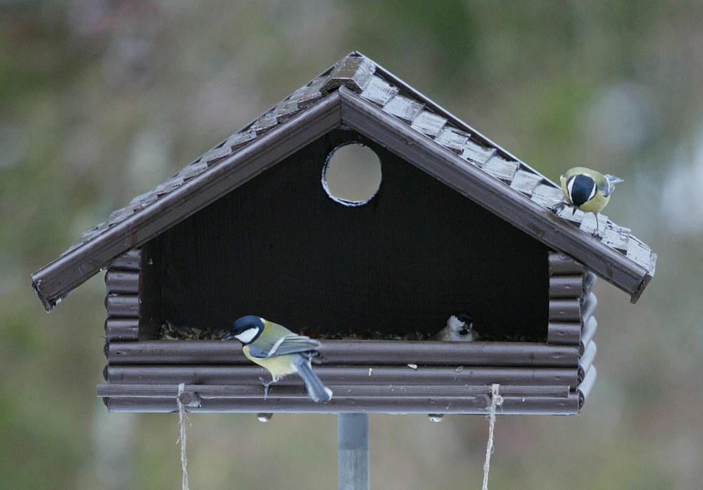 Bei der Auswahl des Vogelfutters im Winter kommt es auf die richtige Mischung an.