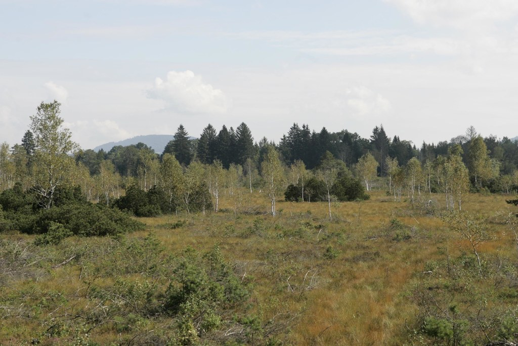 Besucherplattform im LIFE-Projekt und NATURA-2000-Gebiet Wenger Moor