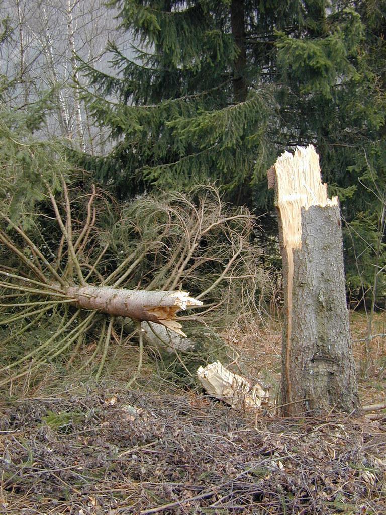 Der Katastrophenfonds hilft auch bei Waldschäden