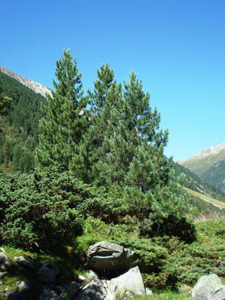 Bergwaldprojekt im Krimmler Achental