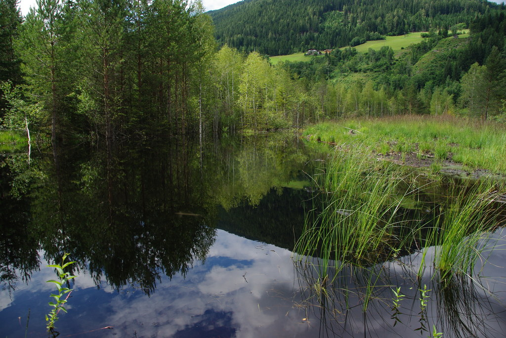 Mandlinger Moor