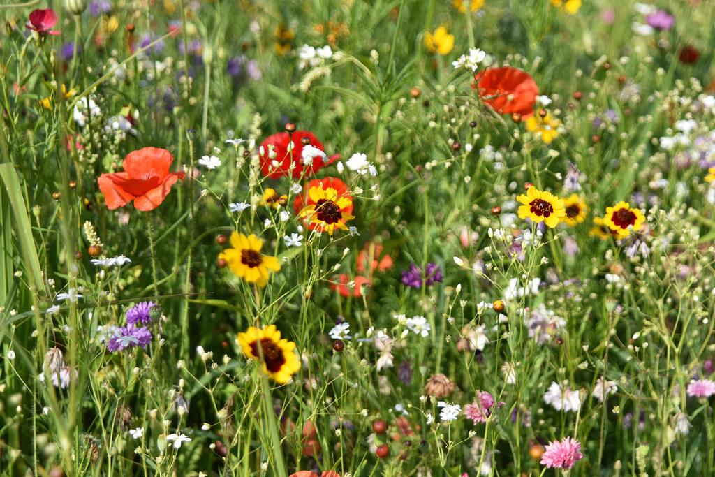 Tag der Biodiversität am 22. Mai