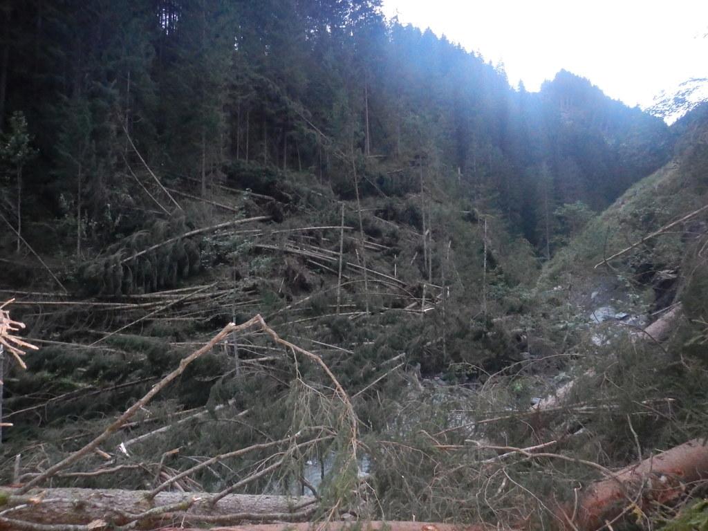 Windwurfereignis Trattenbach