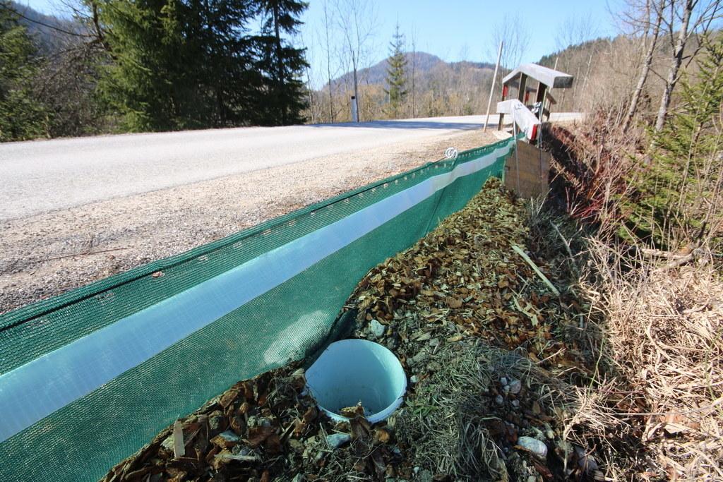Amphibienschutzzäune werden im ganzen Land Salzburg von mehr als 150 ehrenamtlic..