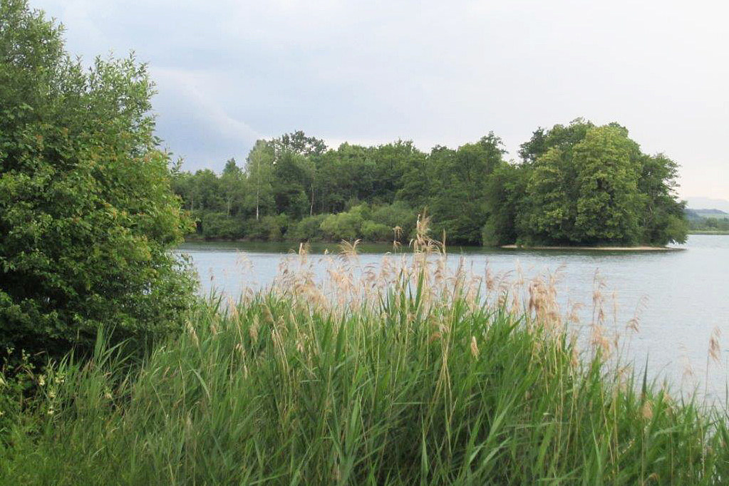 Rund vier Kilometer des Wallerseeufers sollen wieder natürlicher gestaltet werde..