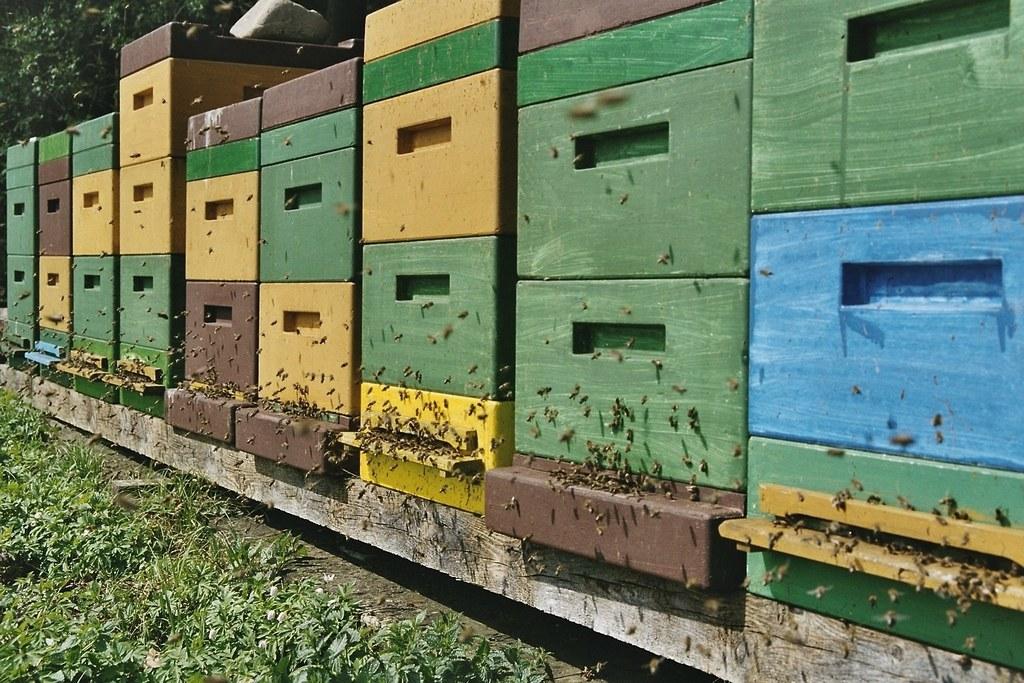 Salzburgs Bienenjahr 2017 ist sehr ertragreich