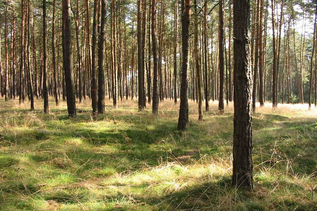 Auch, wenn die Brandgefahr noch überwiegend gering ist, heißt es im Wald: Vorsic..
