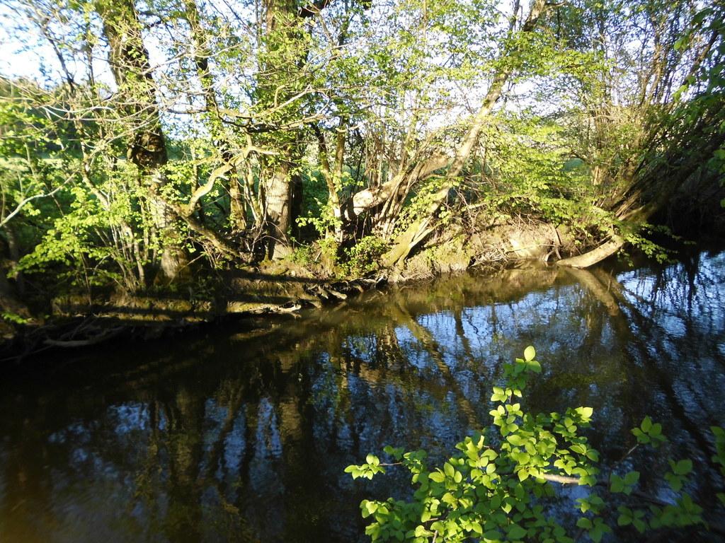"""Der naturnahe Bachlauf im Europaschutzgebiet """"Wengermoor"""" ist ein wichtiger Lebe.."""