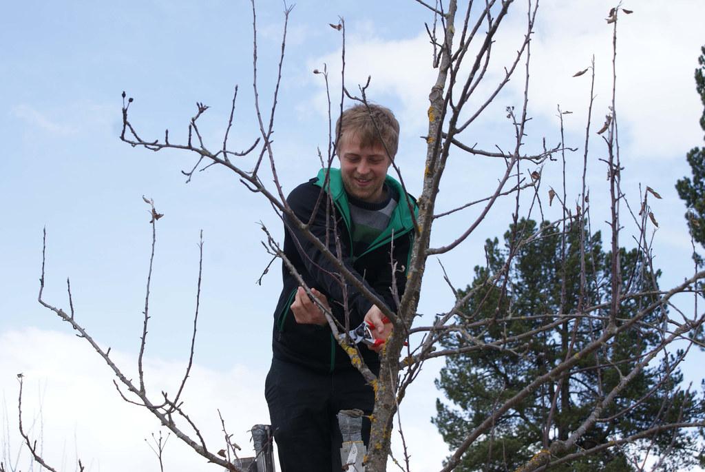 Obstbaumschnitt im alten Klostergarten der Bezirkshauptmannschaft Tamsweg.