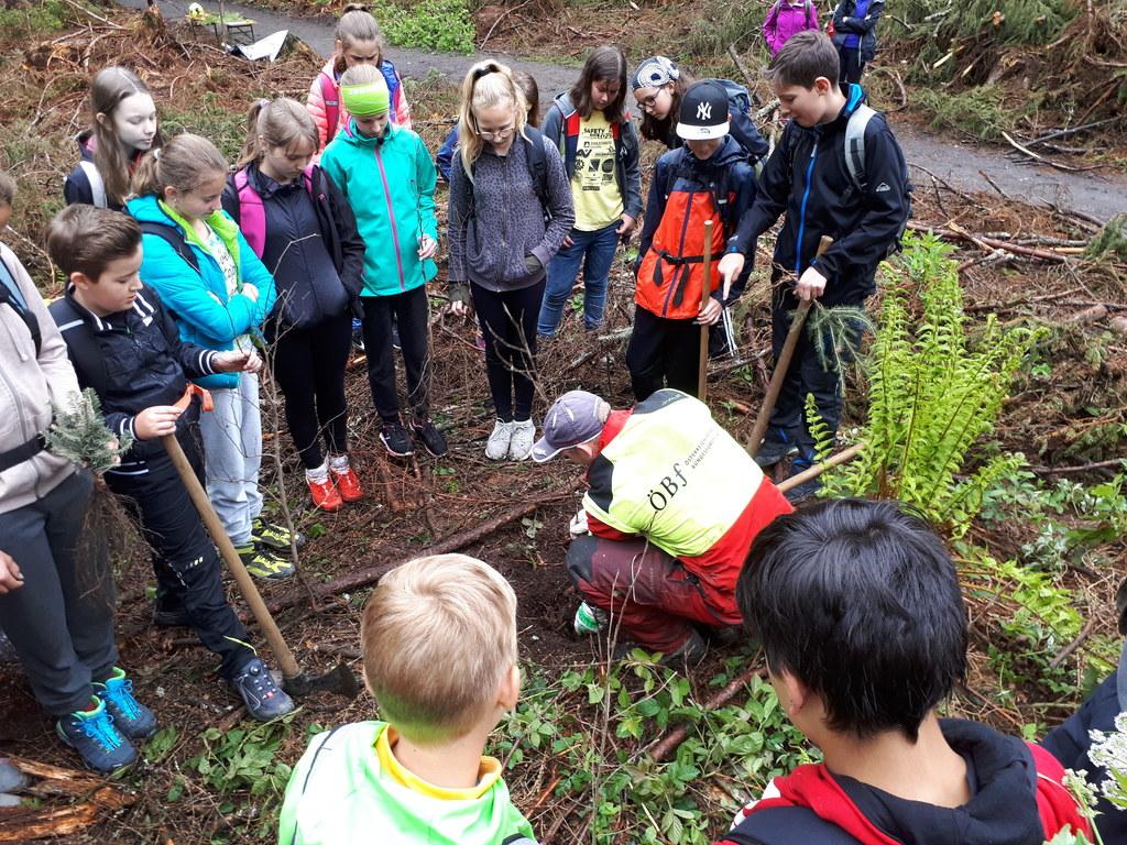 Die Schülerinnen und Schüler lernen alles über den Wald und küren den