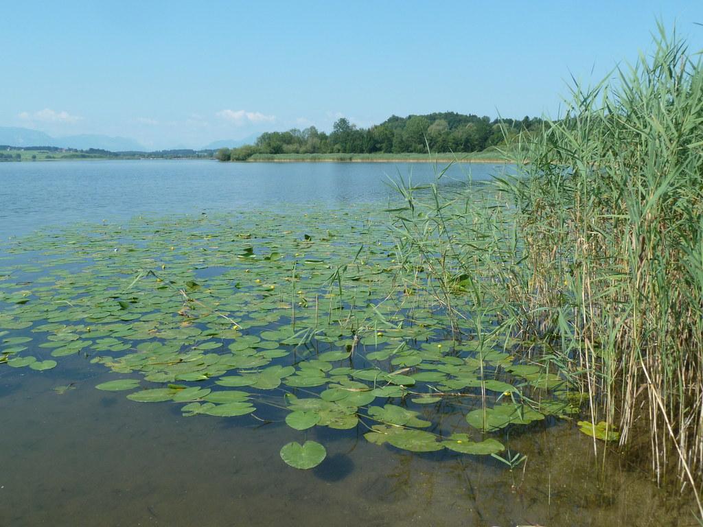 Naturnahe Uferzonen bilden einen wichtigen Rückzugsraum für die heimische Tier- ..