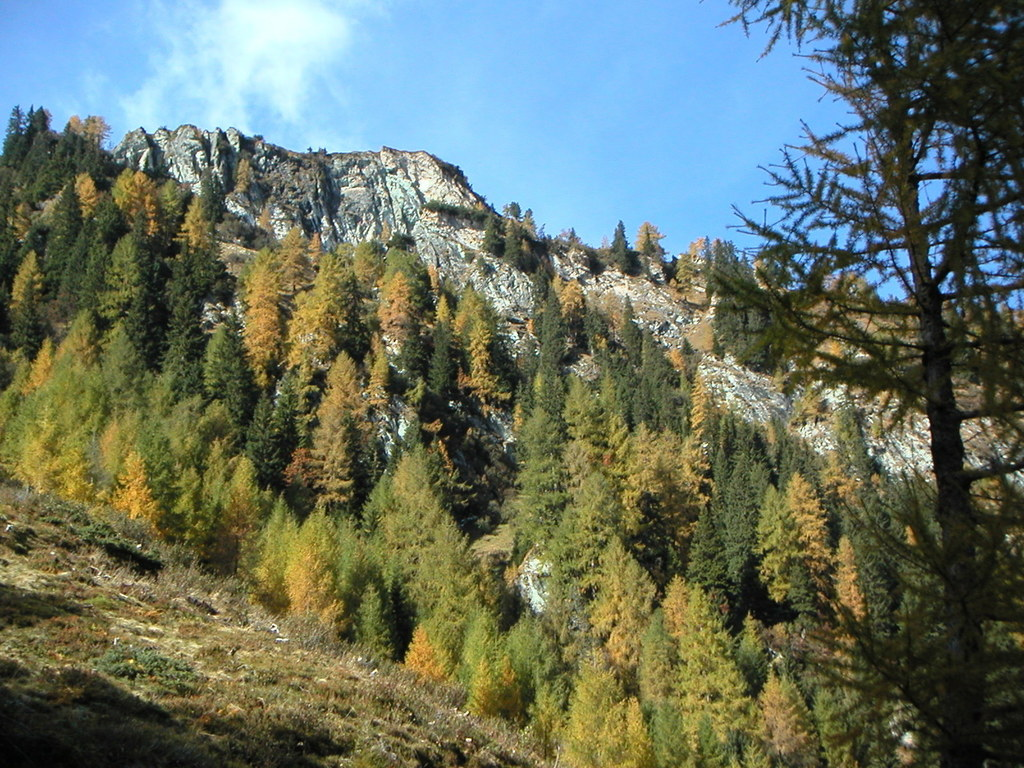 In Salzburgs Wäldern ist aufgrund der Brandgefahr höchste Vorsicht geboten.