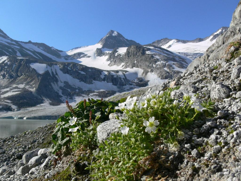 Das Obersulzbachtal ist eines der vielen Kleinode im Nationalpark Hohe Tauern.