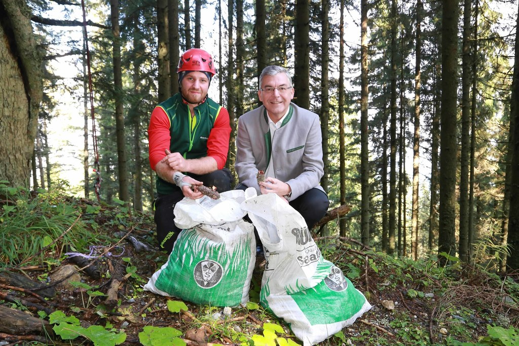Reiche Zapfenernte: Baumpfleger Wolfgang Schernthaner und LR Josef Schwaiger mit..