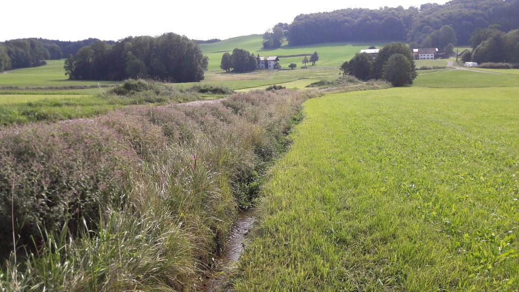 Uferbegleitstreifen bieten nach der Flurbereinigung in Liersching (Nußdorf) neue..