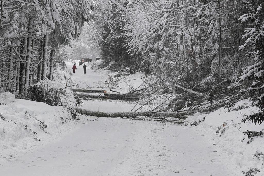 Die Schneelast auf den Bäumen bedeutet im Moment große Gefahr.