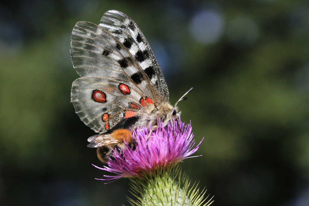 Die Tage der Natur starten am 1. Juni: In allen Bezirken gibt es zahlreiche Exkursionen, Wanderungen und Veranstaltungen.