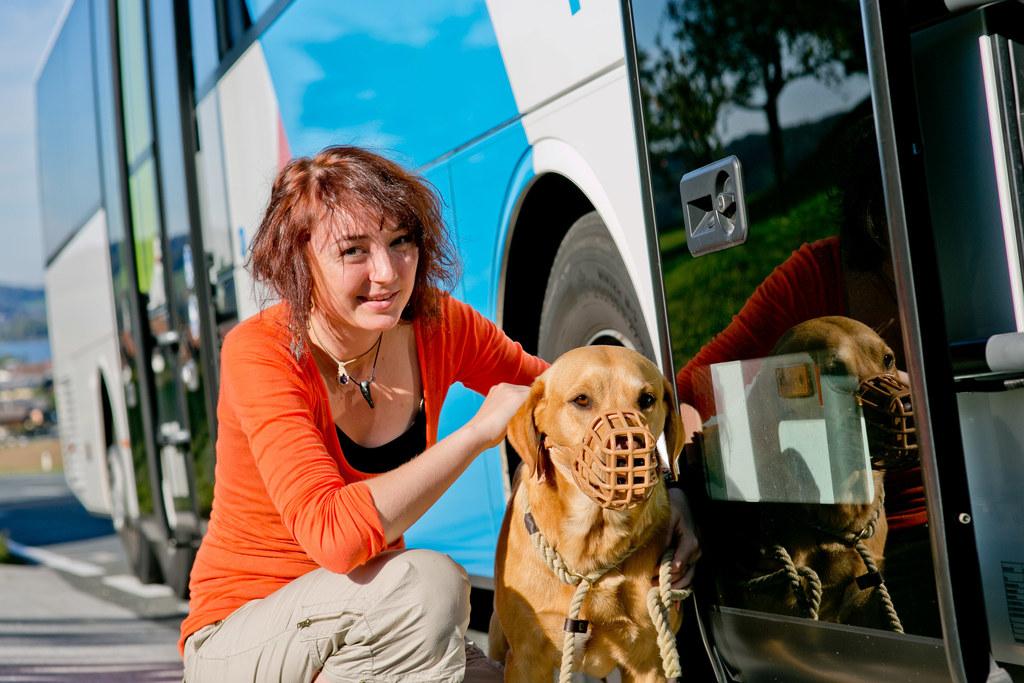 Hunde fahren gratis in den Öffis, wenn ihre Besitzer eine myRegio-Jahreskarte haben.