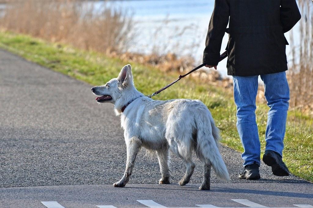 Mit dem Hund Gassi gehen ist erlaubt, allerdings bitte alleine oder nur mit Personen, mit denen man zusammen wohnt. Andere Kontakte bestmöglich meiden.