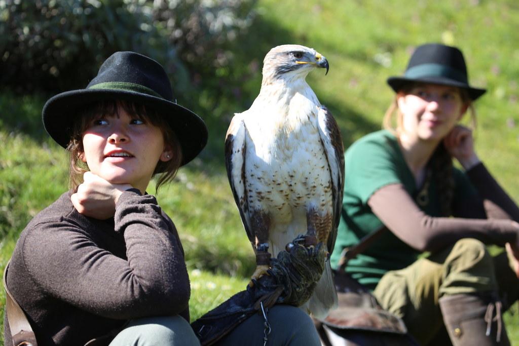Die spektakulären Greifvogelvorführungen des Landesfalkenhofes auf der Burg Hohenwerfen finden statt.
